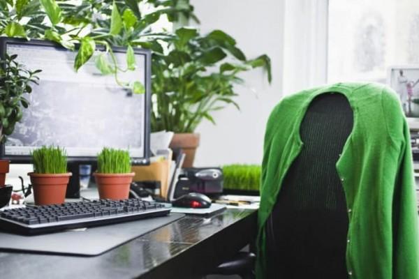 Saiba quais as melhores plantas para escritório