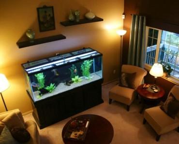 aprenda decoração com aquário